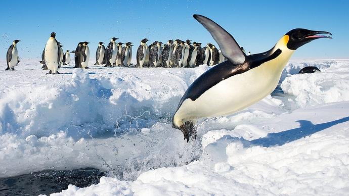 Penguin-antactica-scaled